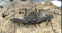 عنکبوت شلاقی در مسیر دزفول