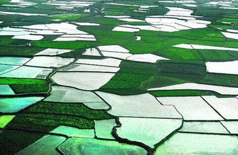 وقتی بی برنامگی در کشاورزی خوزستان، بحران میآفریند
